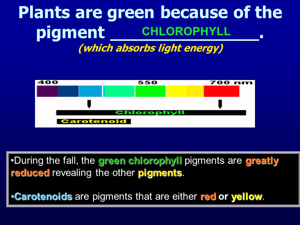 Plants are green because of the pigment ______________.