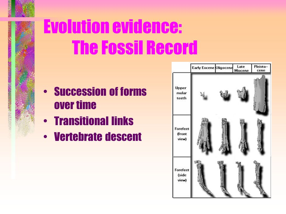 Evolution evidence: The Fossil Record Succession of forms over time Transitional links Vertebrate descent