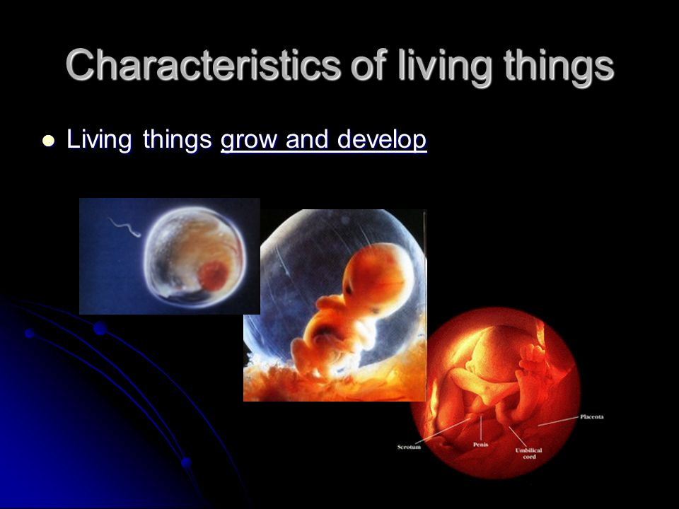 Characteristics of living things Living things grow and develop Living things grow and develop