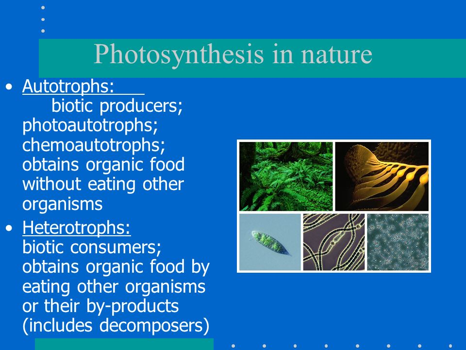 Photosynthesis in nature Autotrophs: biotic producers; photoautotrophs; chemoautotrophs; obtains organic food without eating other organisms Heterotro