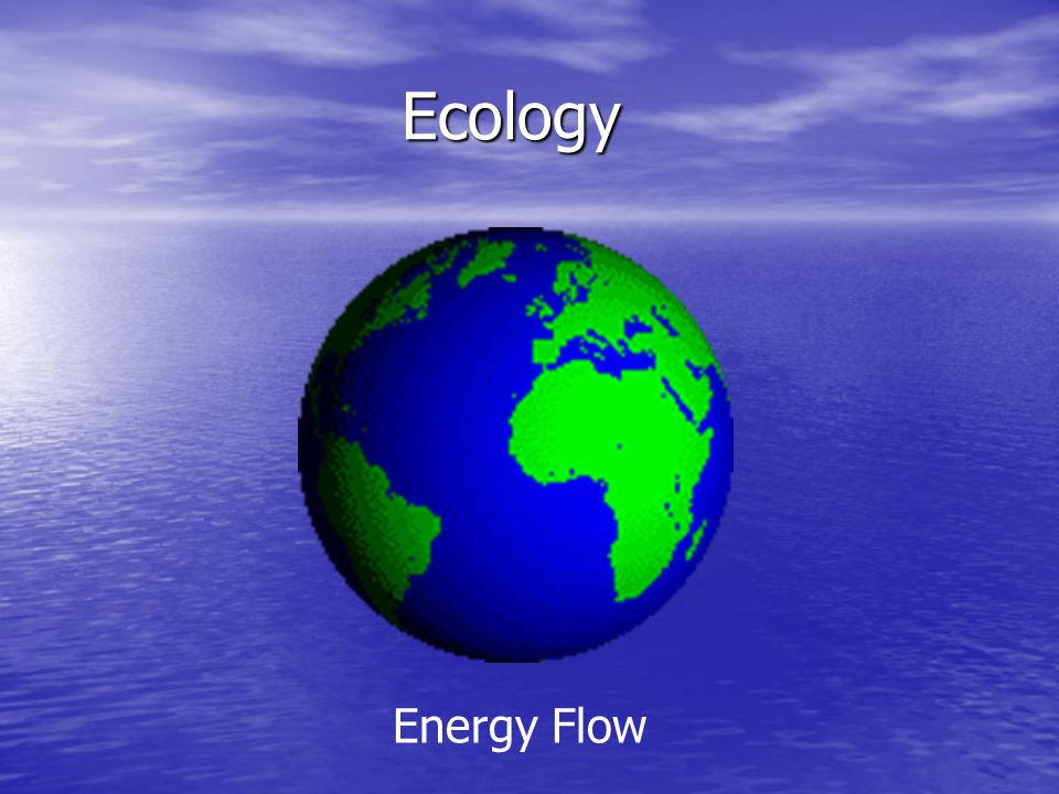 Ecology Ecology Energy Flow