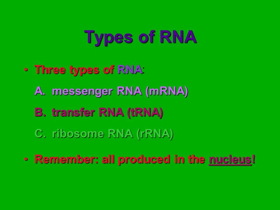 Types of RNA Three types ofRNAThree types of RNA: A.messenger RNA (mRNA) B.transfer RNA (tRNA) C.ribosome RNA (rRNA) Remember: all produced in the nuc