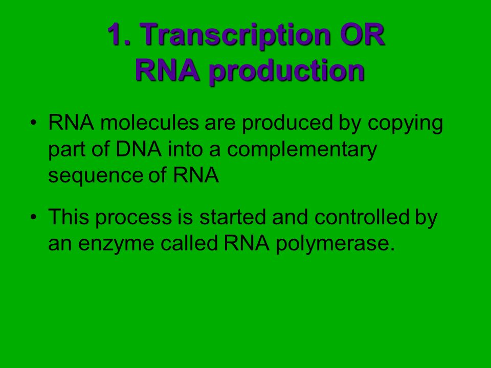 1. Transcription OR RNA production RNA molecules are produced by copying part of DNA into a complementary sequence of RNA This process is started and