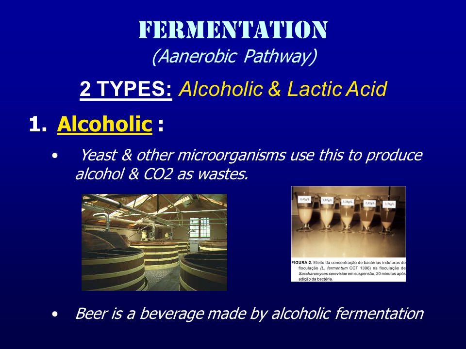FERMENTATION (Aanerobic Pathway) 2 TYPES: Alcoholic & Lactic Acid 1.