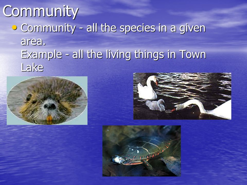 Community Community - all the species in a given area. Example - all the living things in Town Lake