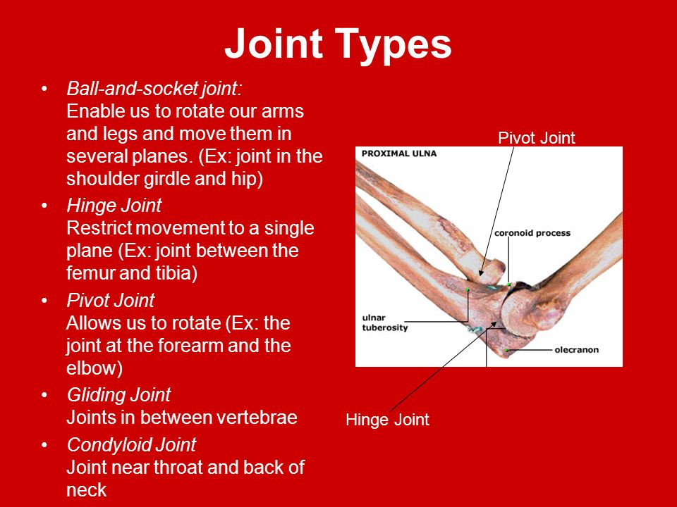 Ball And Socket Joint Shoulder Joint Types Ball And Socket