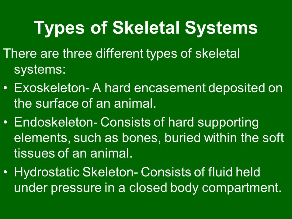Types of Skeletal Systems There are three different types of skeletal systems: Exoskeleton- A hard encasement deposited on the surface of an animal. E