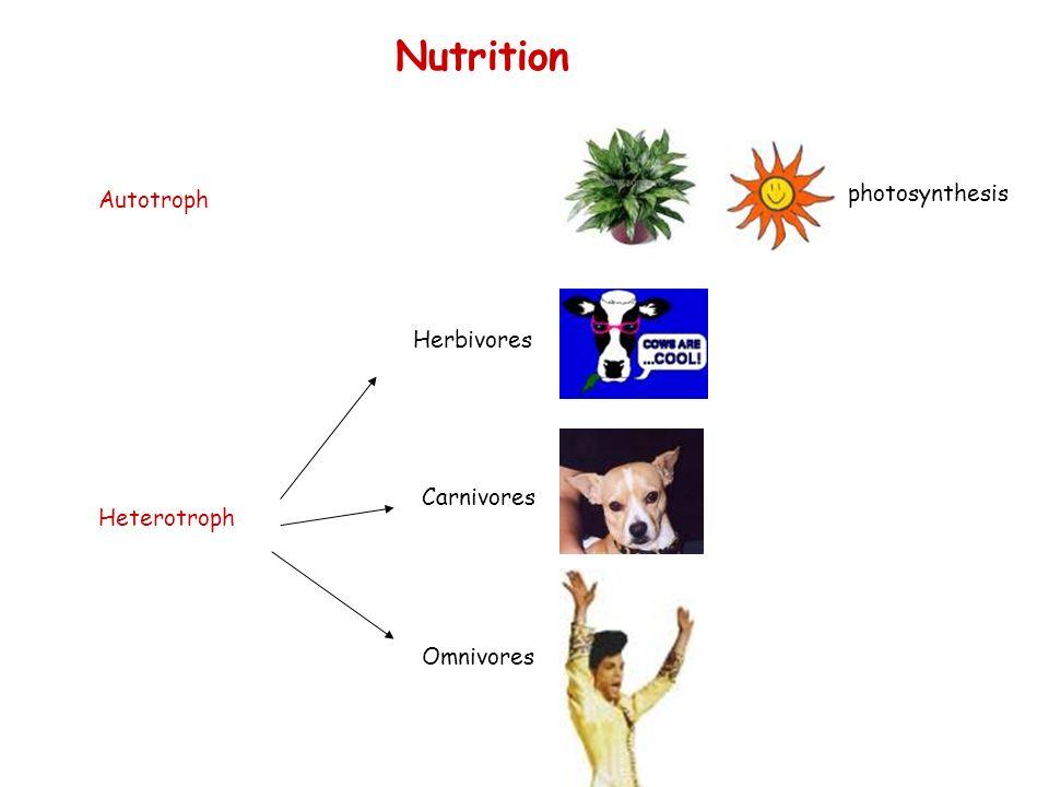 Autotroph photosynthesis Nutrition Herbivores Carnivores Omnivores Heterotroph