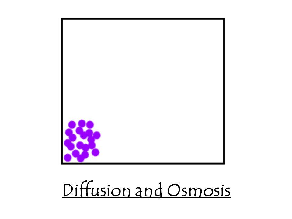 Diffusion and Osmosis