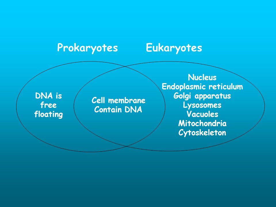 ProkaryotesEukaryotes Cell membrane Contain DNA Nucleus Endoplasmic reticulum Golgi apparatus Lysosomes Vacuoles Mitochondria Cytoskeleton DNA is free