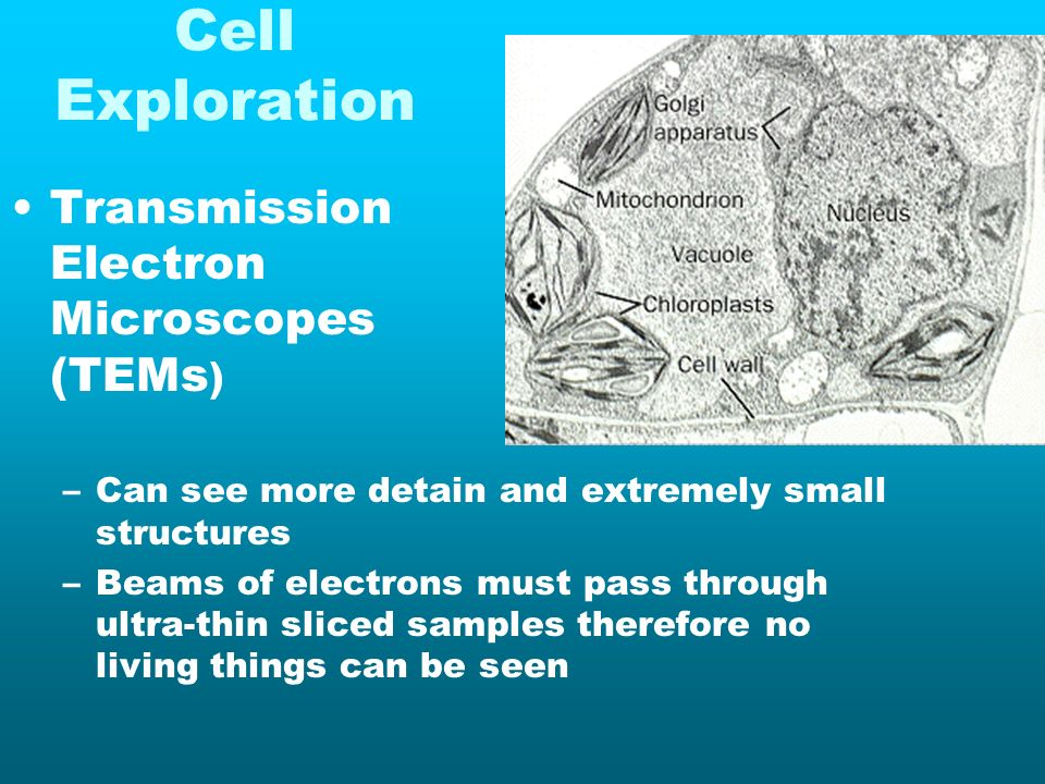 Cell Exploration Transmission Electron Microscopes (TEMs ) –Can see more detain and extremely small structures –Beams of electrons must pass through u