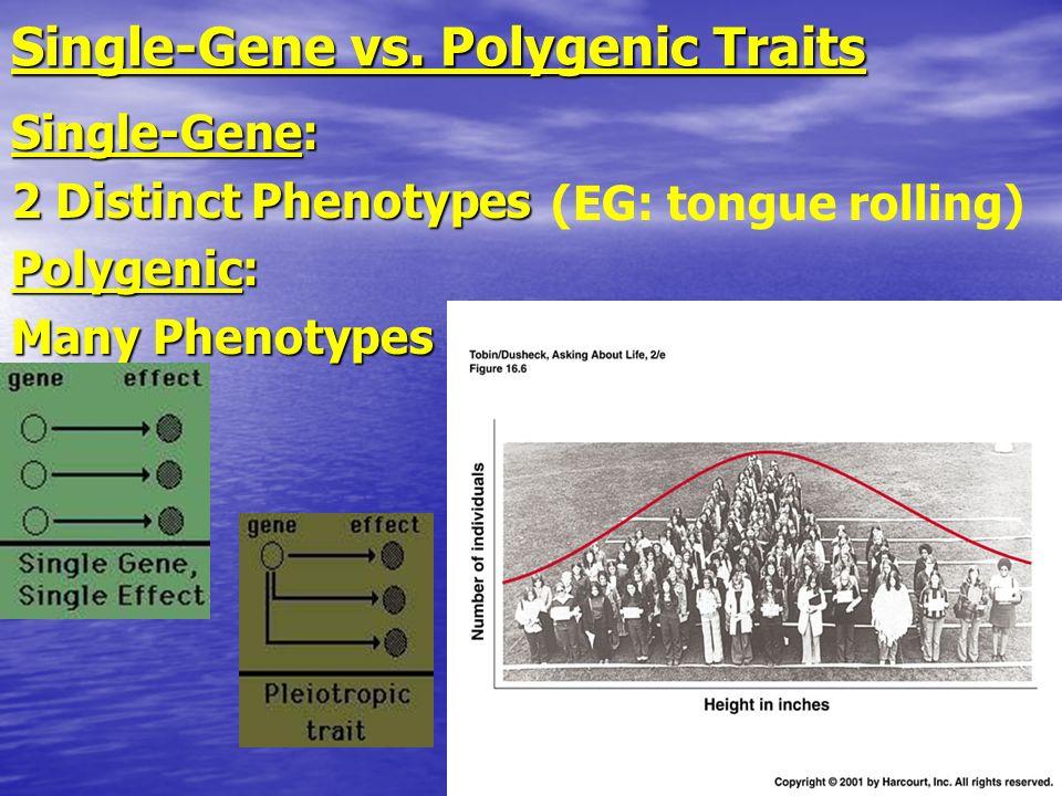 Single-Gene vs. Polygenic Traits Single-Gene: 2 Distinct Phenotypes Polygenic: Many Phenotypes (EG: tongue rolling)
