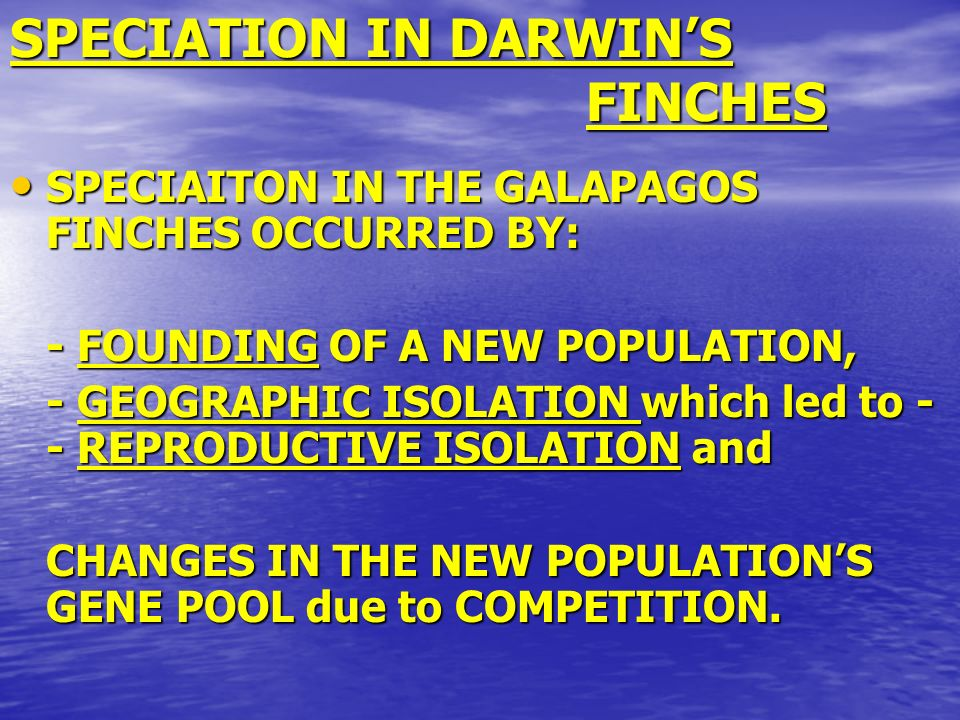 SPECIATION IN DARWINS FINCHES SPECIAITON IN THE GALAPAGOS FINCHES OCCURRED BY: SPECIAITON IN THE GALAPAGOS FINCHES OCCURRED BY: - FOUNDING OF A NEW PO