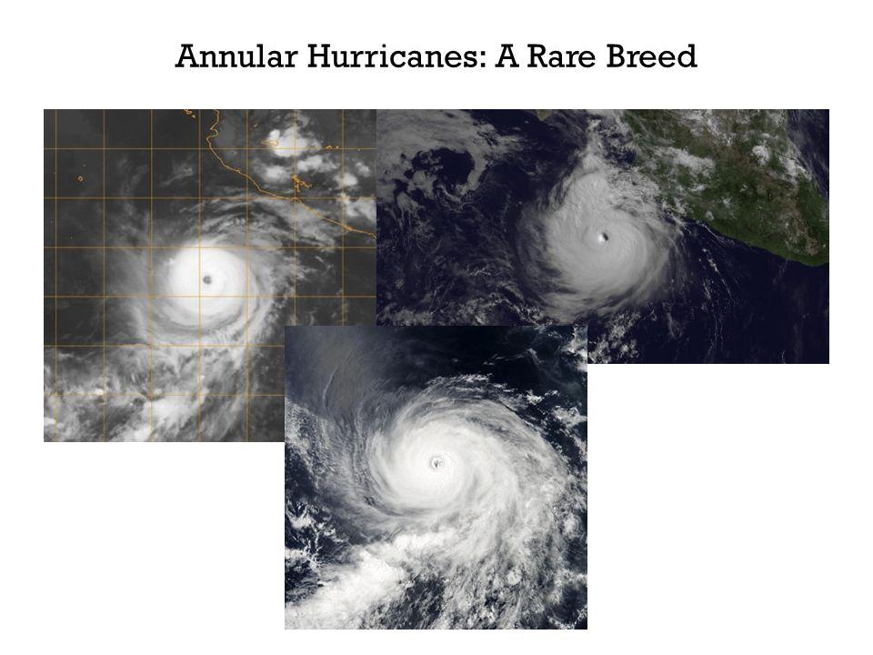 Annular Hurricanes: A Rare Breed