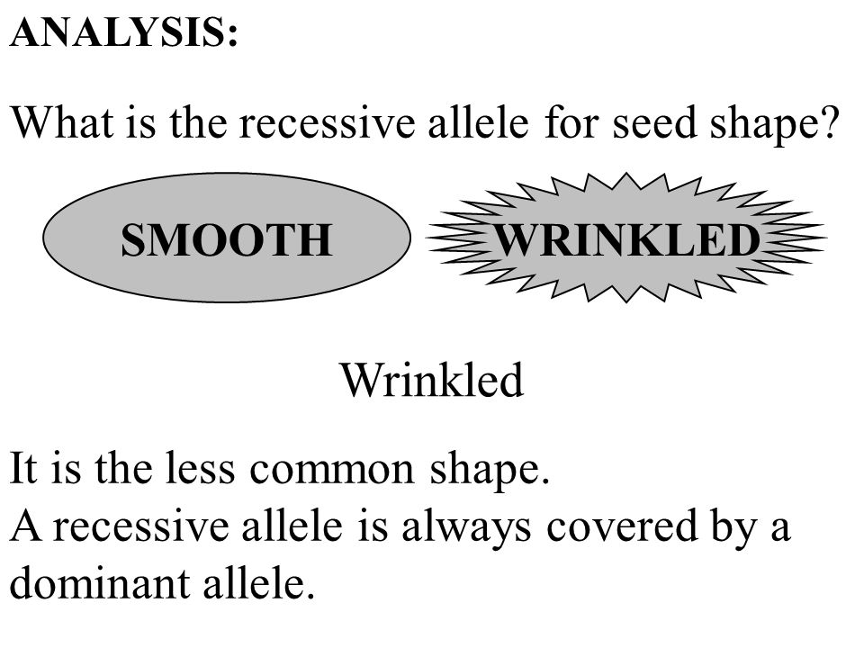 What is the recessive allele for seed shape? ANALYSIS: SMOOTH Wrinkled It is the less common shape. A recessive allele is always covered by a dominant