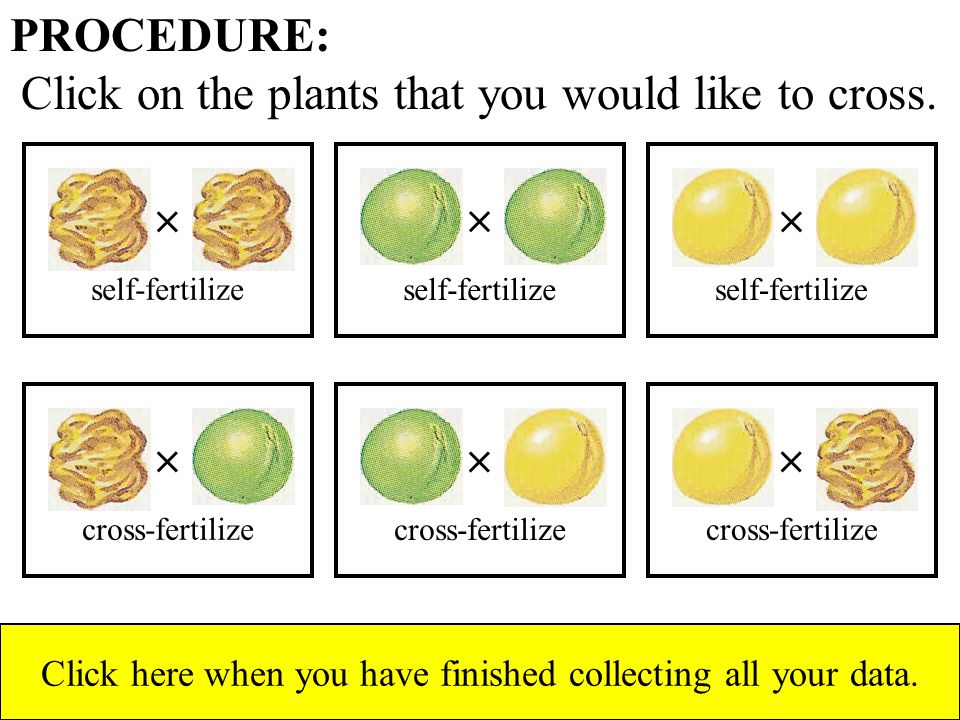 PROCEDURE: Click on the plants that you would like to cross.