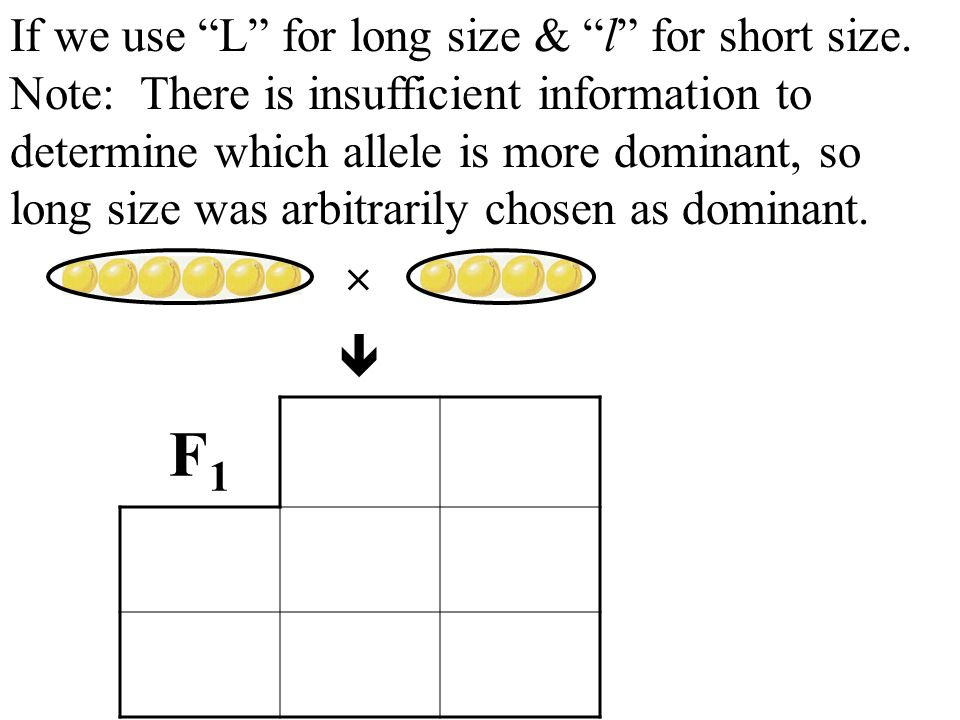 If we use L for long size & l for short size. Note: There is insufficient information to determine which allele is more dominant, so long size was arb