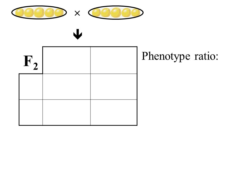 F2F2 Phenotype ratio: