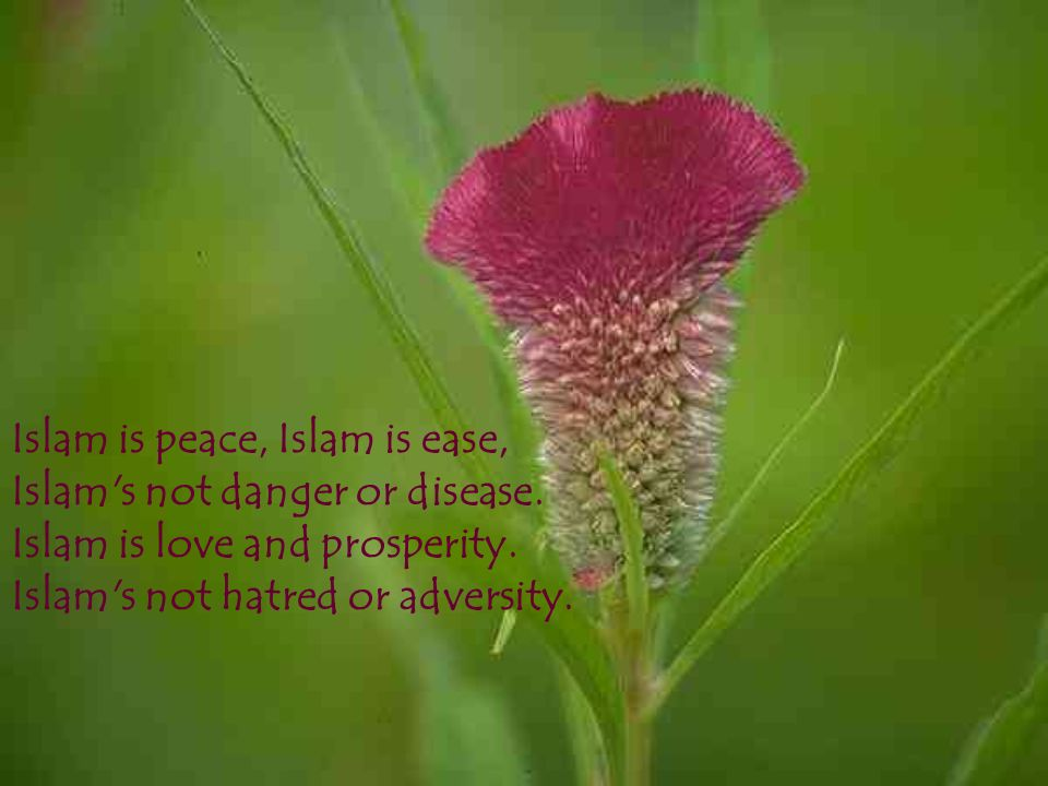 Islam is peace, Islam is ease, Islam's not danger or disease. Islam is love and prosperity. Islam's not hatred or adversity.
