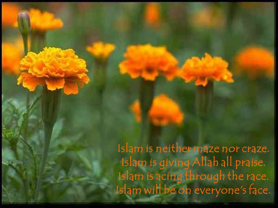 Islam is neither maze nor craze. Islam is giving Allah all praise. Islam is acing through the race. Islam will be on everyone's face.