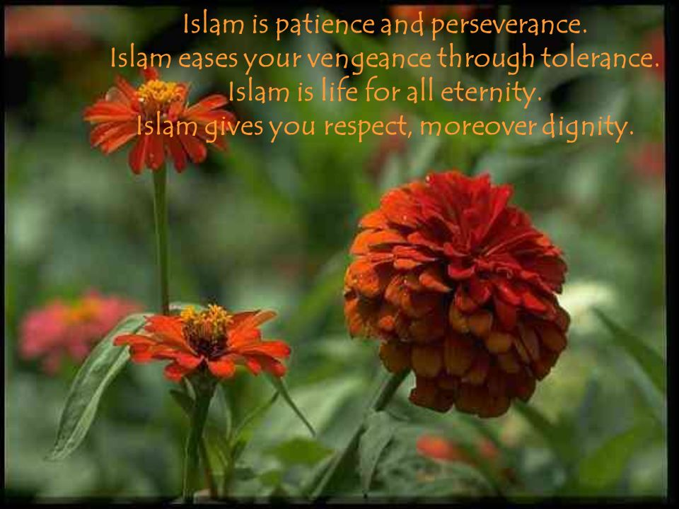 Islam is patience and perseverance. Islam eases your vengeance through tolerance. Islam is life for all eternity. Islam gives you respect, moreover di