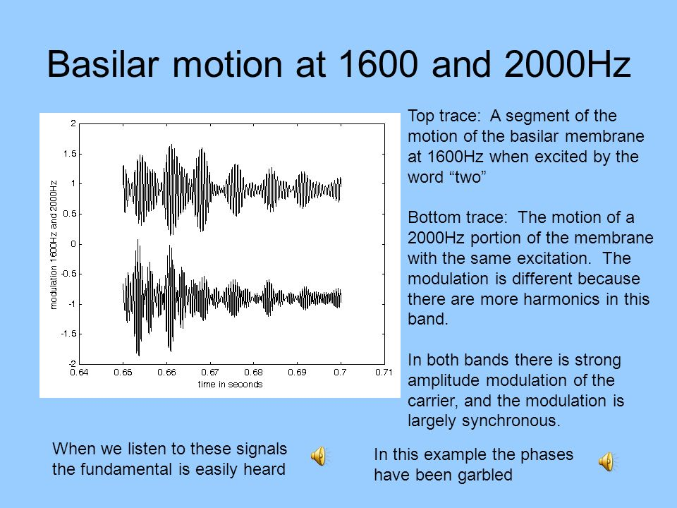Basilar motion at 1600 and 2000Hz Top trace: A segment of the motion of the basilar membrane at 1600Hz when excited by the word two Bottom trace: The