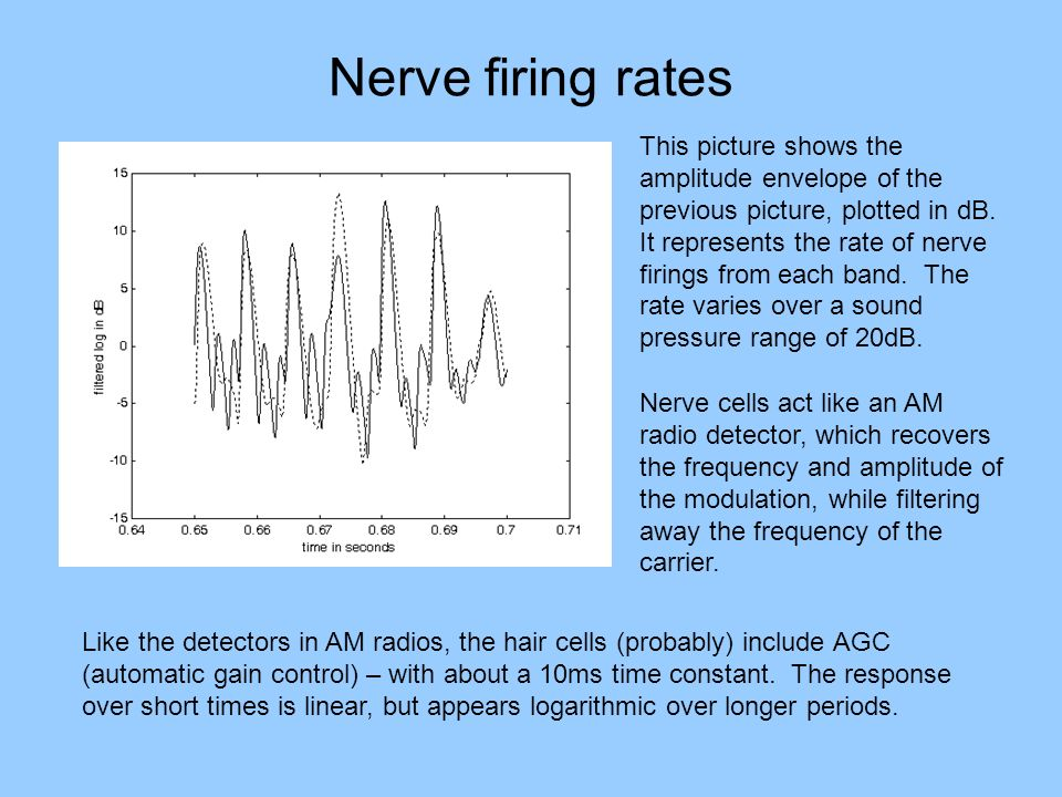 Nerve firing rates Nerve cells act like an AM radio detector, which recovers the frequency and amplitude of the modulation, while filtering away the f