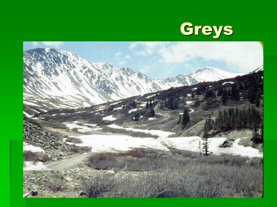 Greys Greys