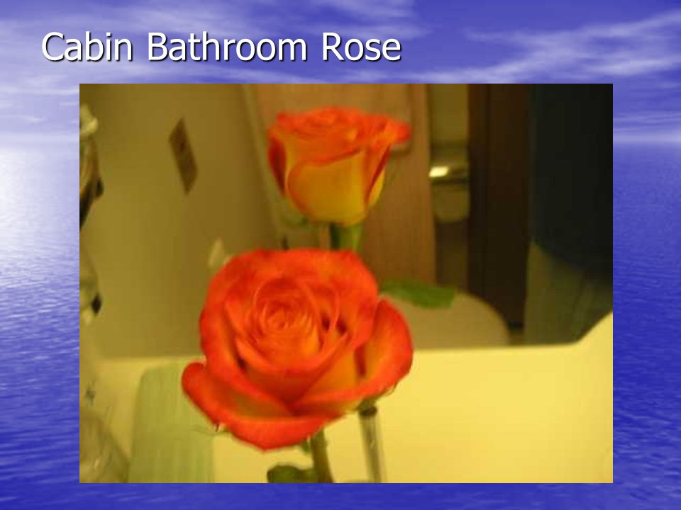 Cabin Bathroom Rose