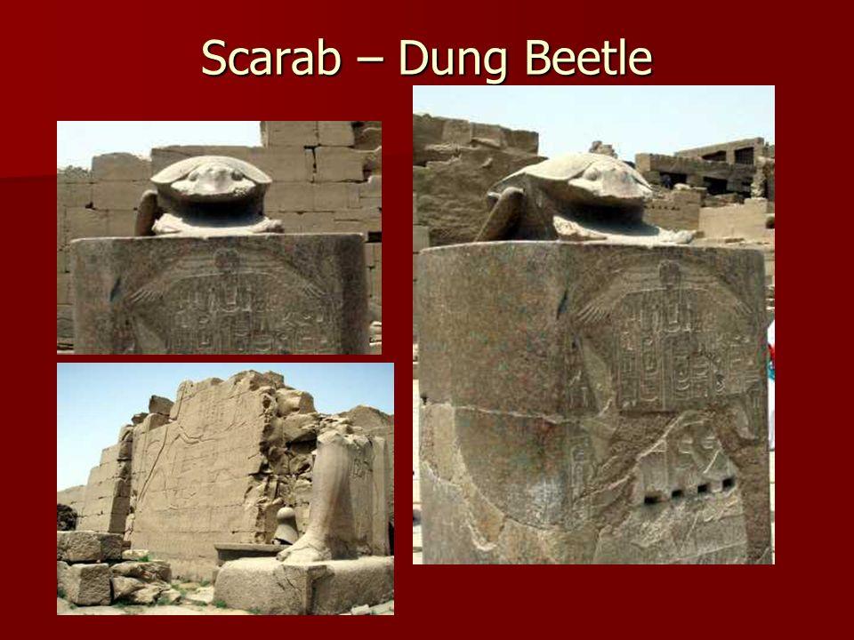 Scarab – Dung Beetle
