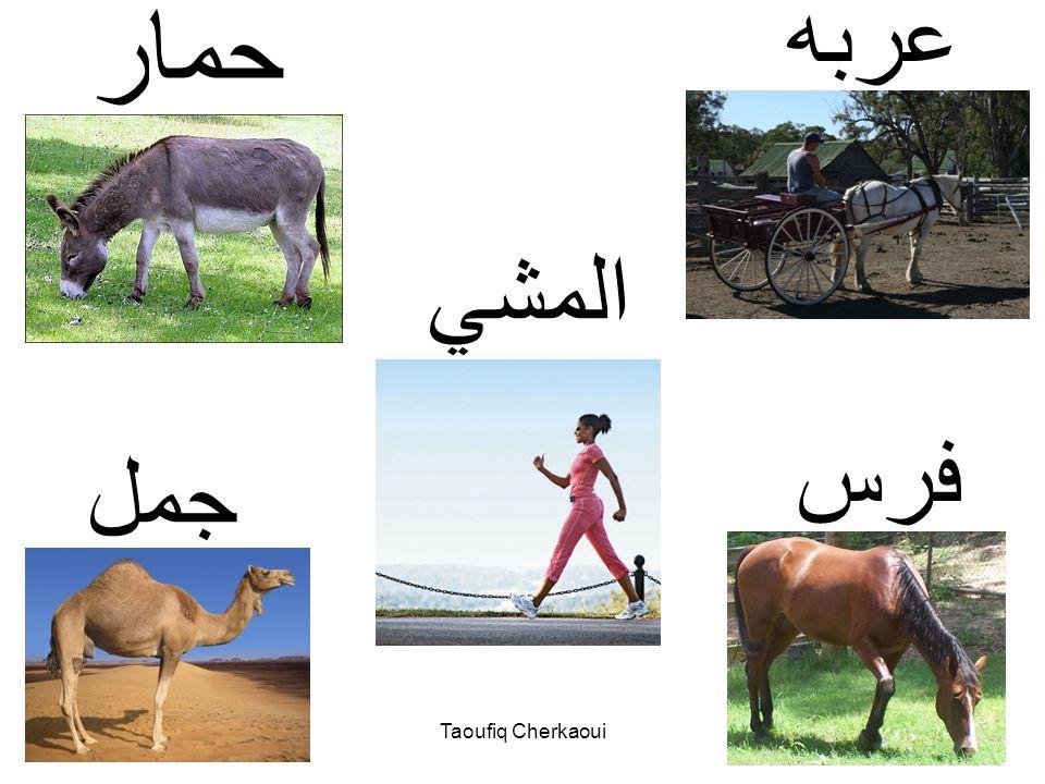 وسائل النقل Taoufiq Cherkaoui