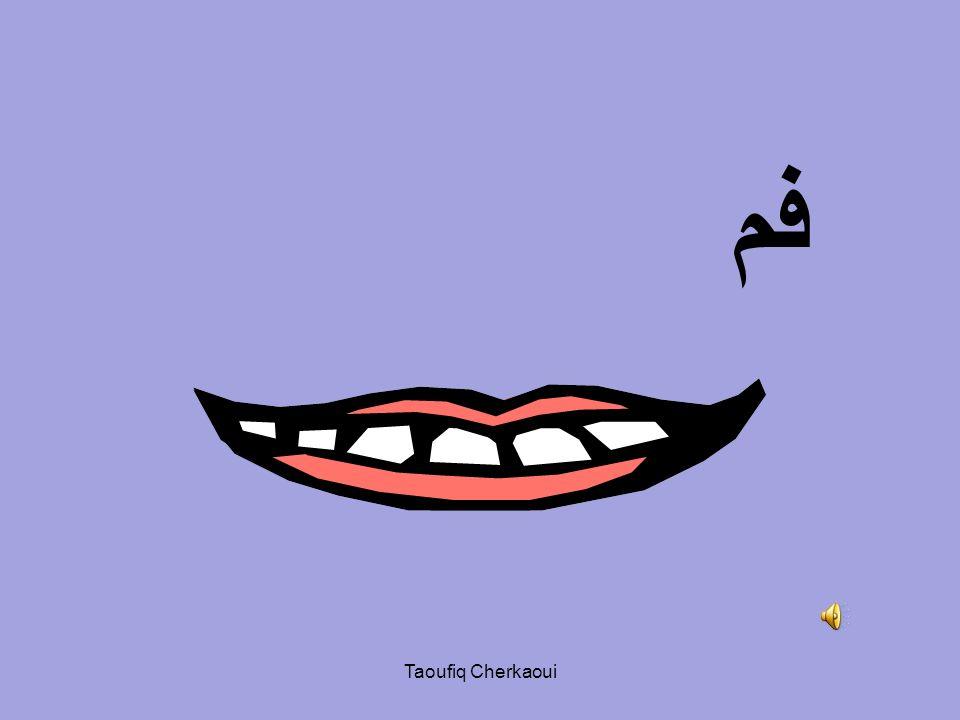 الرأس الوجه Taoufiq Cherkaoui
