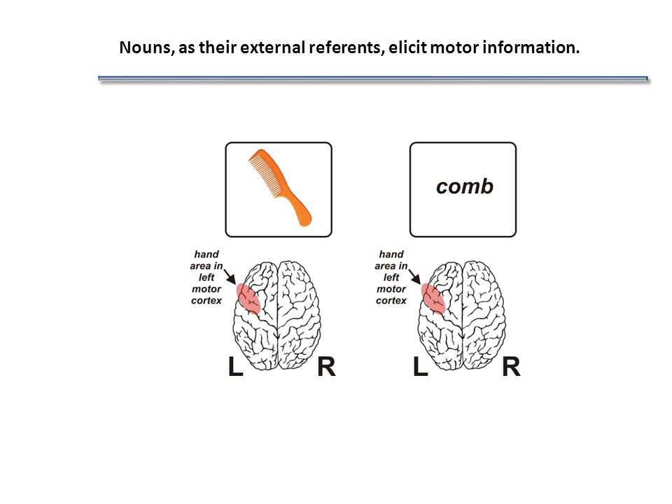 Nouns, as their external referents, elicit motor information.