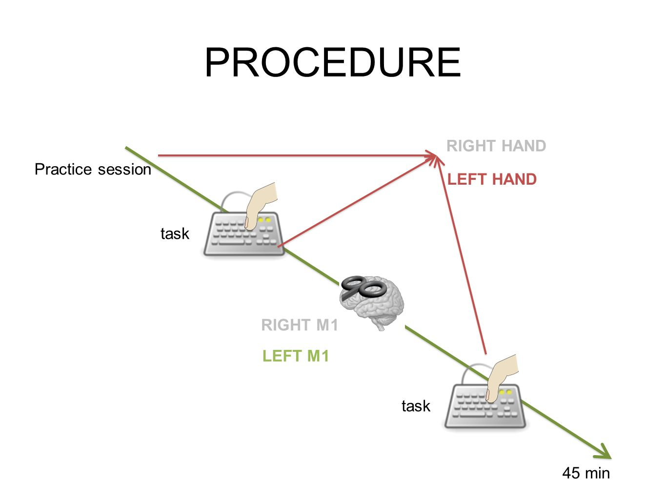 PROCEDURE Practice session task 45 min RIGHT M1 RIGHT HAND LEFT HAND LEFT M1