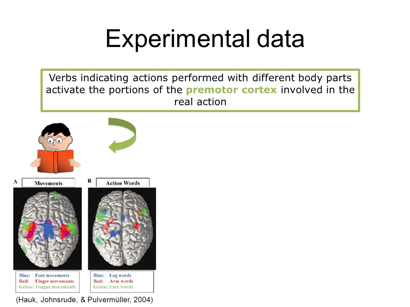 Experimental data Verbs indicating actions performed with different body parts activate the portions of the premotor cortex involved in the real action (Hauk, Johnsrude, & Pulvermüller, 2004)