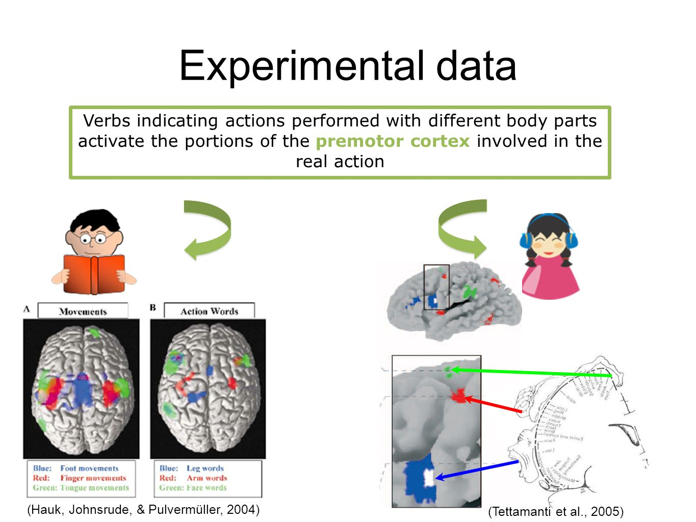 Experimental data Verbs indicating actions performed with different body parts activate the portions of the premotor cortex involved in the real action (Hauk, Johnsrude, & Pulvermüller, 2004) (Tettamanti et al., 2005)