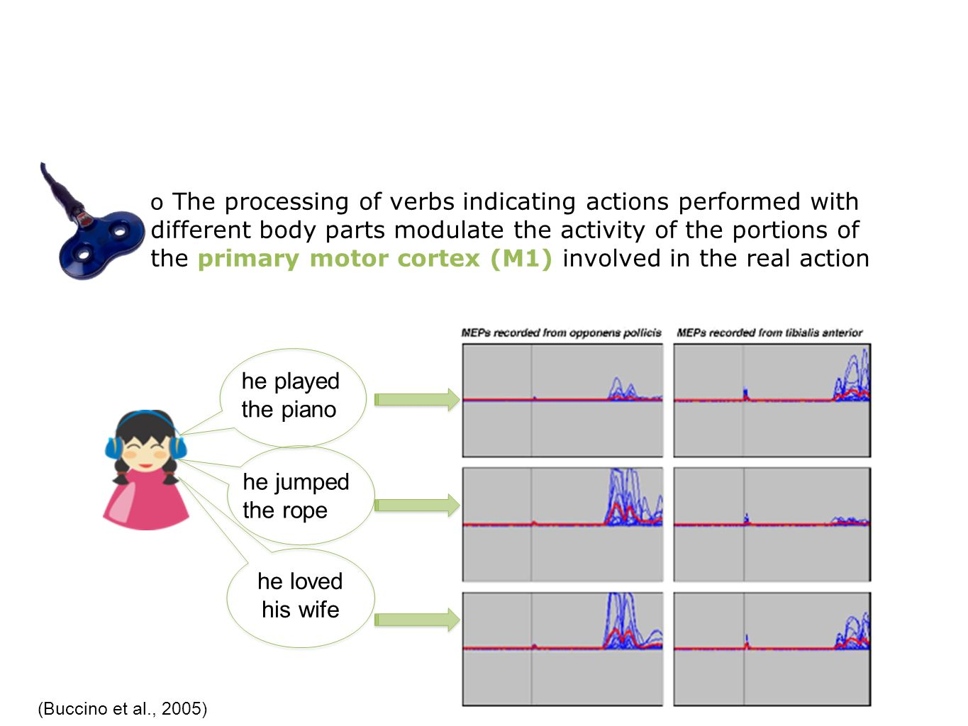 o The processing of verbs indicating actions performed with different body parts modulate the activity of the portions of the primary motor cortex (M1) involved in the real action (Buccino et al., 2005) he played the piano he jumped the rope he loved his wife