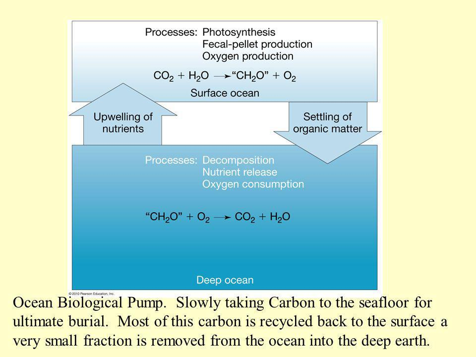 Ocean Biological Pump. Slowly taking Carbon to the seafloor for ultimate burial. Most of this carbon is recycled back to the surface a very small frac