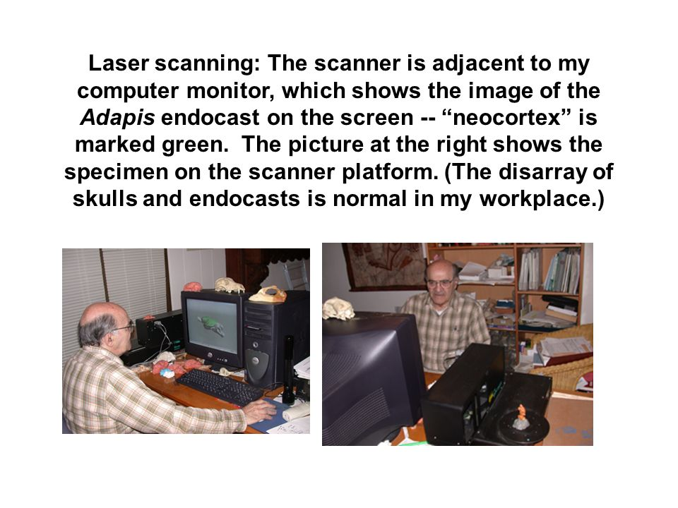 Laser scanning: The scanner is adjacent to my computer monitor, which shows the image of the Adapis endocast on the screen -- neocortex is marked gree