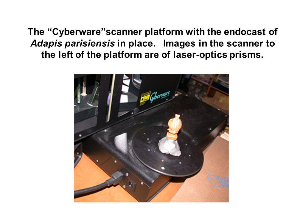 The Cyberwarescanner platform with the endocast of Adapis parisiensis in place. Images in the scanner to the left of the platform are of laser-optics