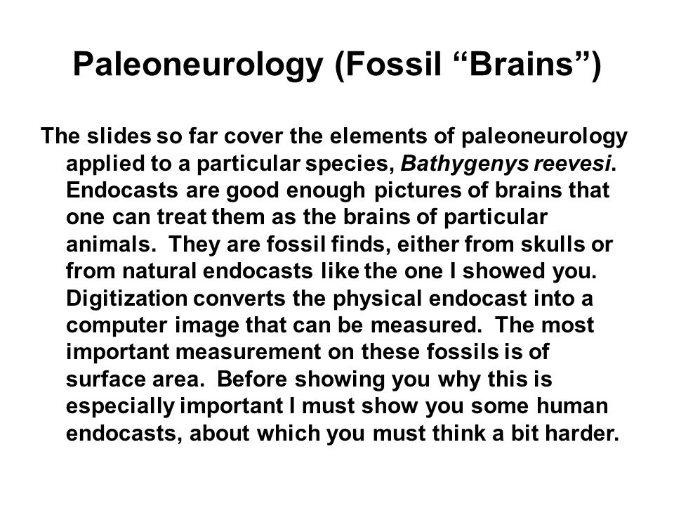 Paleoneurology (Fossil Brains) The slides so far cover the elements of paleoneurology applied to a particular species, Bathygenys reevesi. Endocasts a