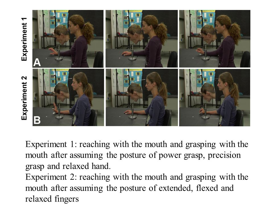 Experiment 1: reaching with the mouth and grasping with the mouth after assuming the posture of power grasp, precision grasp and relaxed hand. Experim