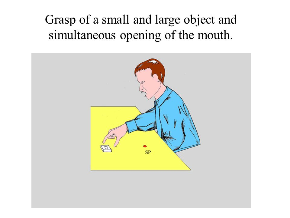 Grasp of a small and large object and simultaneous opening of the mouth.