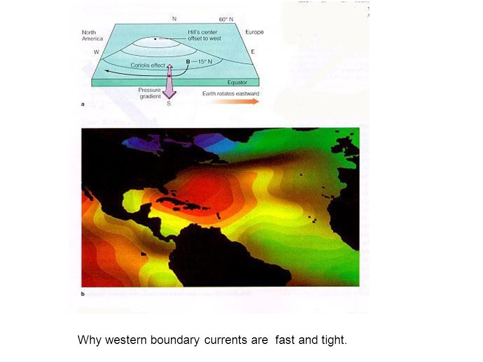 Why western boundary currents are fast and tight.