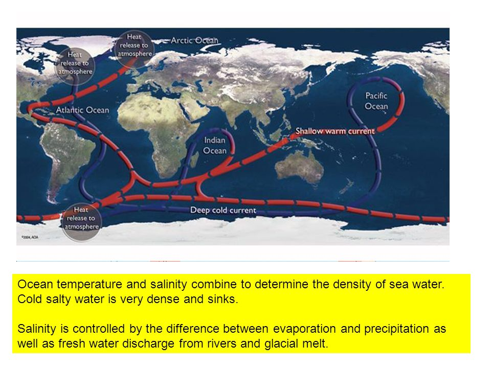 Ocean temperature and salinity combine to determine the density of sea water. Cold salty water is very dense and sinks. Salinity is controlled by the