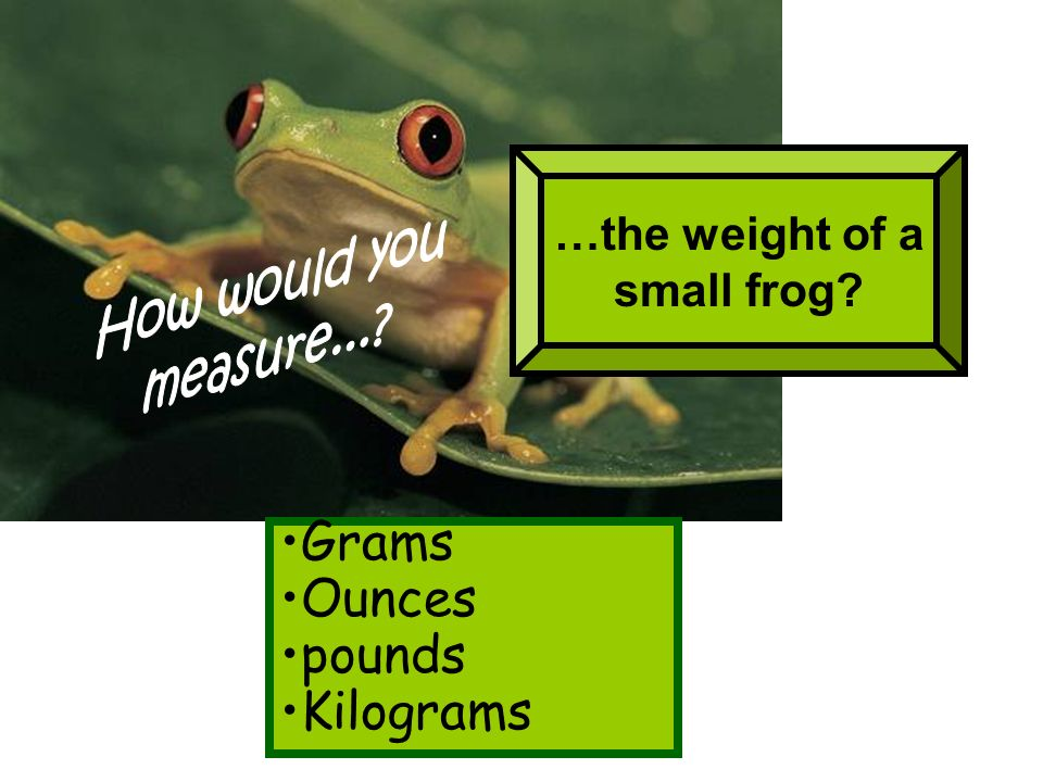 …the weight of a small frog? Grams Ounces pounds Kilograms