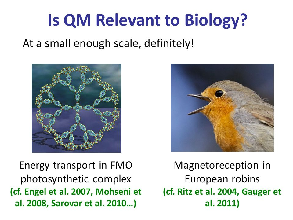 Is QM Relevant to Biology. At a small enough scale, definitely.