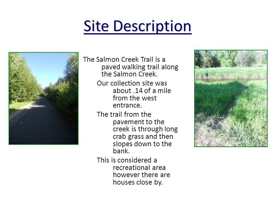 Site Description The Salmon Creek Trail is a paved walking trail along the Salmon Creek.