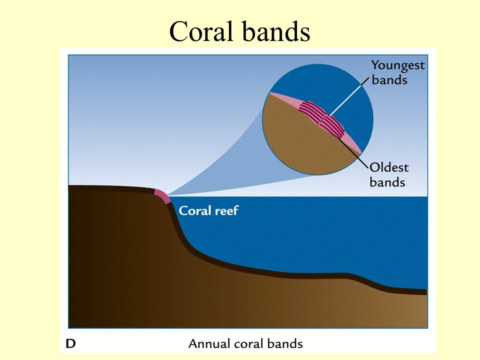 Coral bands