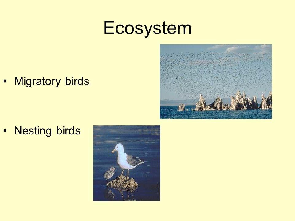 Ecosystem Migratory birds Nesting birds